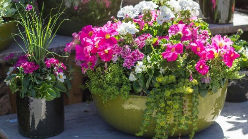 9 secrets to container gardening