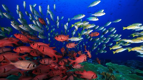 Coral reef census will help scientists protect fragile underwater habitats