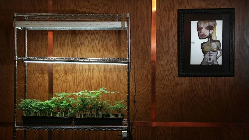 A painting with your meds? An art gallery pops up inside a cannabis dispensary