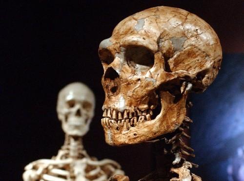 Neanderthal genes helped modern humans evolve, studies suggest