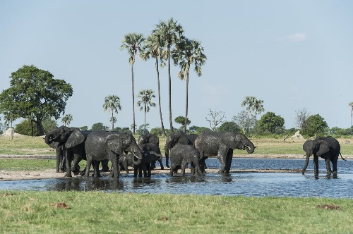 Wildlife safaris in Zambia and Zimbabwe national parks