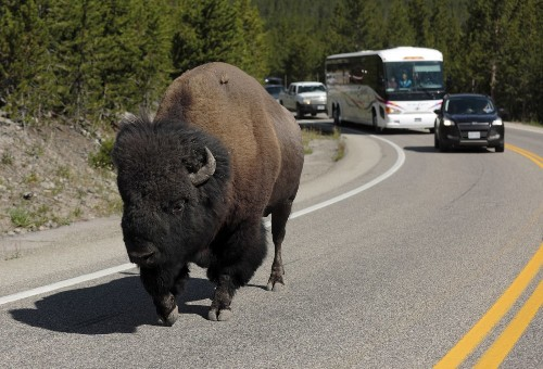 The do's and don'ts of Yellowstone National Park - Los Angeles Times