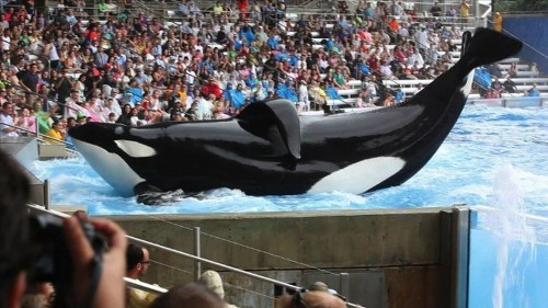 SeaWorld uses newspaper ads to strike back at 'Blackfish' charges - Los Angeles Times