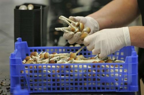 Feeling rejected? Mushrooms could help