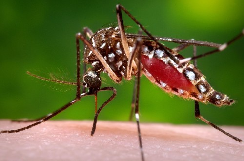 Google to throw software engineering into the Zika virus fight - Los Angeles Times