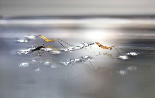 Watch this robotic water-strider hop on top of water
