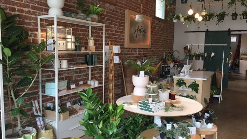 Folia Collective, a houseplant lover's haven, reopens in roomy new Eagle Rock digs