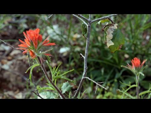 Weekend hike: Go now to savor Malibu Creek's wildflowers, rock pools