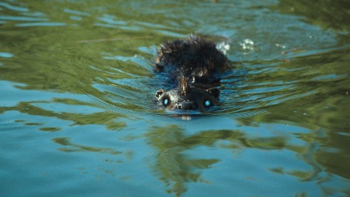 'Zombeavers,' about coeds and zombie mutants, is schlocky fun