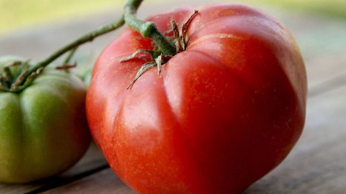 If you're only growing one type of tomato this year, it should be this - Los Angeles Times