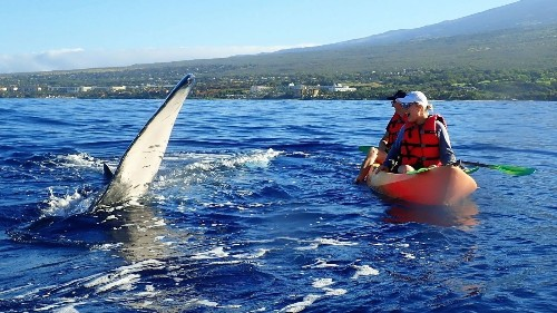 It's whale-watching season in Hawaii, and these creatures are ready to play