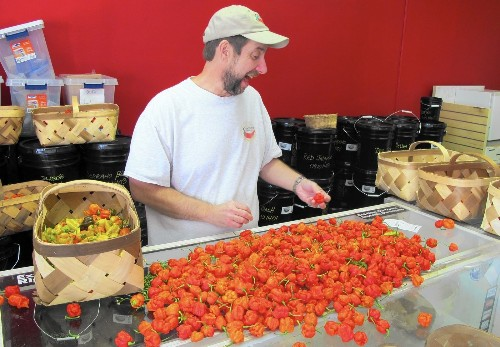 From pot to hot: How a grower produced world's most fiery chile pepper - Los Angeles Times