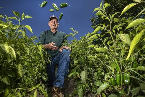 Jalapeño farmer wins $23.3 million in heated dispute with Sriracha maker