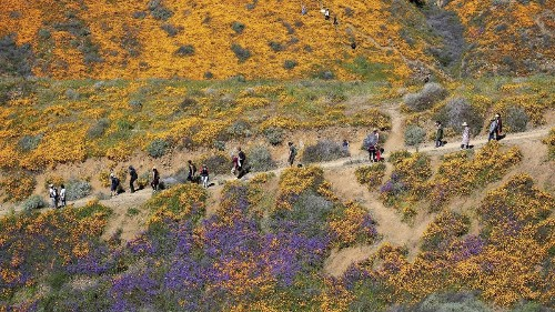In memory of Super Bloom in Lake Elsinore, which officials have declared over