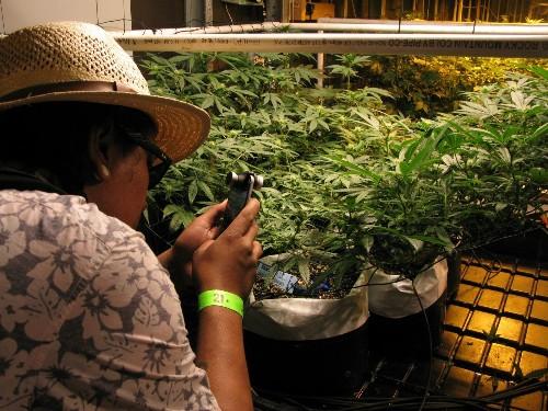 Exploring Colorado's cannabis tourism scene in Denver - Los Angeles Times