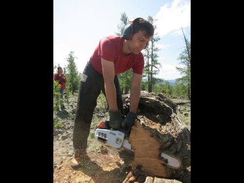 Did rainy climate aid Genghis Khan? Tree rings offer clues.