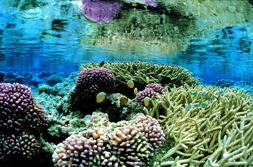 Obama adds to Pacific islands monument, world's biggest marine reserve - Los Angeles Times