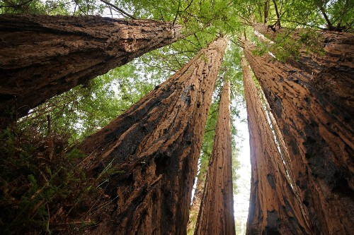If you pick hiking over shopping on Black Friday, you may get in free to some California state parks
