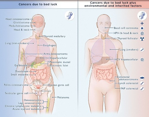 Scientists explain how stem cells and 'bad luck' cause cancer