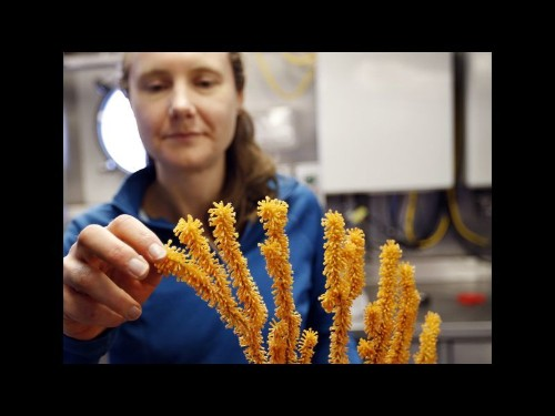 Off Channel Islands, scientists explore coral — and our oceans' future