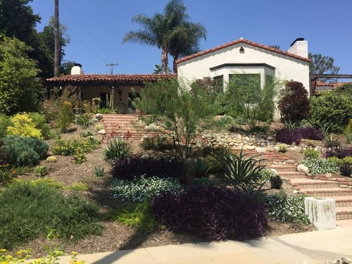 Before & After: A massive front lawn is transformed into an inviting, low-water landscape