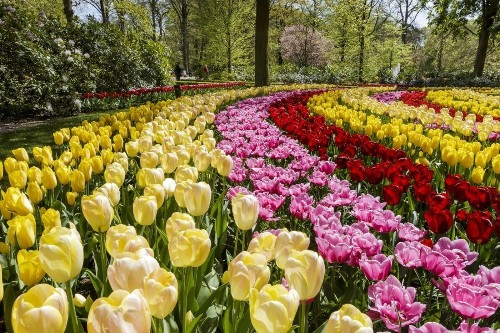 Vastly outnumbered by all of the tulips at Keukenhof in the Netherlands