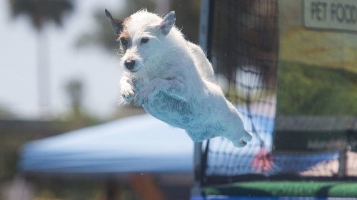 Pet Expo to allow visitors to bring their dogs for the first time this year