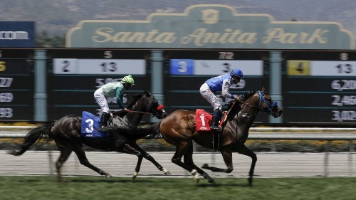 Statistics might not tell the whole story about horse racing deaths