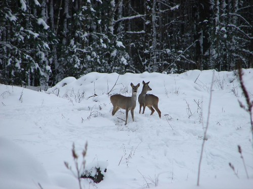 Near the site of the Chernobyl nuclear disaster, wildlife bounces back - Los Angeles Times