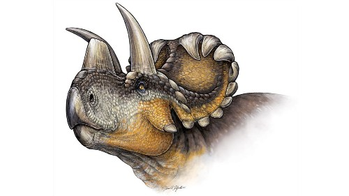 Meet Wendiceratops, a horned dinosaur unlike any other - Los Angeles Times