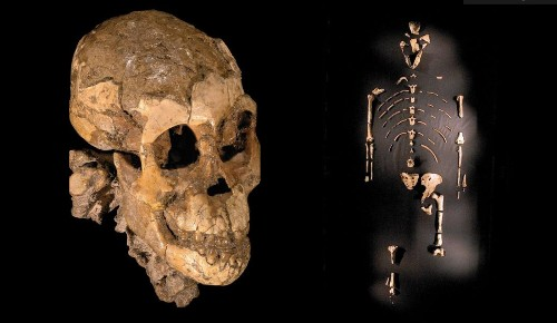 Discoverer of Lucy skeleton hopes to find what made us human