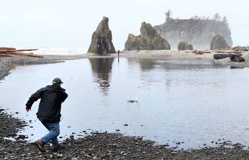 Seeing firsthand why Olympic National Park is one of the nation's great wilderness areas - Los Angeles Times