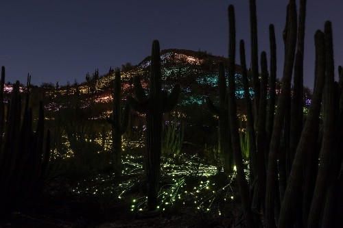 Quick, get to Phoenix before this desert garden light show fades