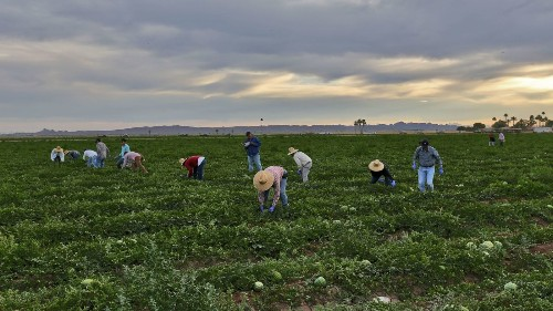 Arizona farm accused of abusing Mexican migrant workers - Los Angeles Times