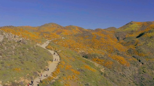 Yes, you still have time to see the super bloom — if you know where to go