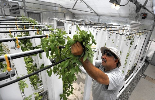 Innovation is blooming at water-wise urban farms - Los Angeles Times