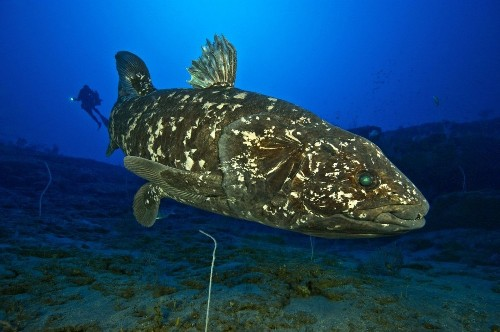 'Living fossil' or no, this strange, rare fish has a lung - Los Angeles Times