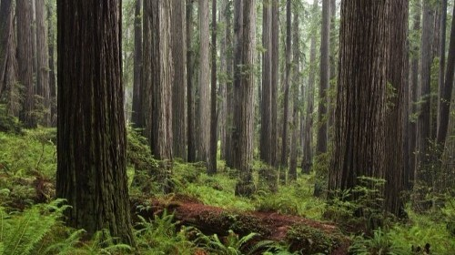 Happy Earth Day! Five redwood parks you've never heard of — and why you should go