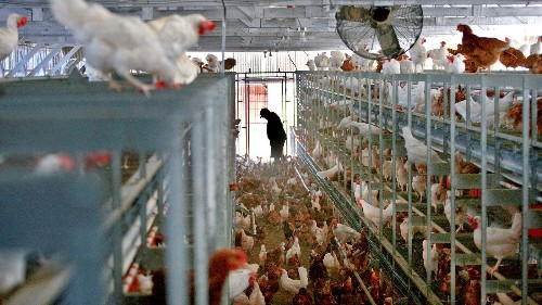 McDonald's move to cage-free eggs is a tipping point for the industry