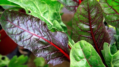 It's time to plant your winter vegetable garden (and gloat on Facebook) - Los Angeles Times
