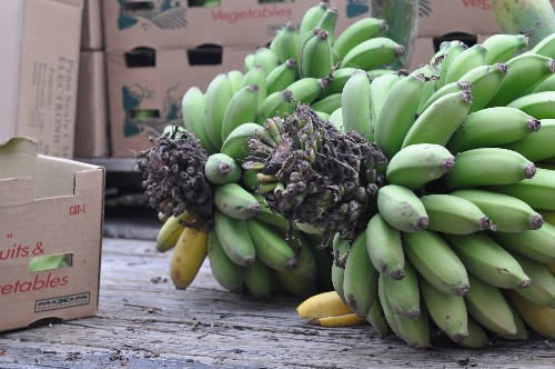Local bananas return to Santa Monica farmers market