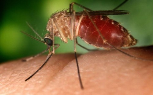 Second West Nile virus death suspected in San Diego County