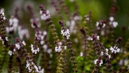 No green thumb needed: 6 drought-tolerant herbs that are almost impossible to kill - Los Angeles Times