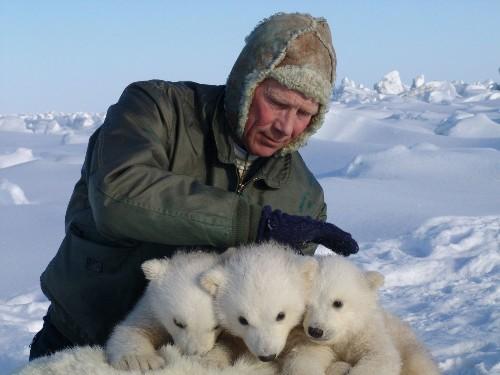 40% decline in polar bears in Alaska, western Canada heightens concern - Los Angeles Times