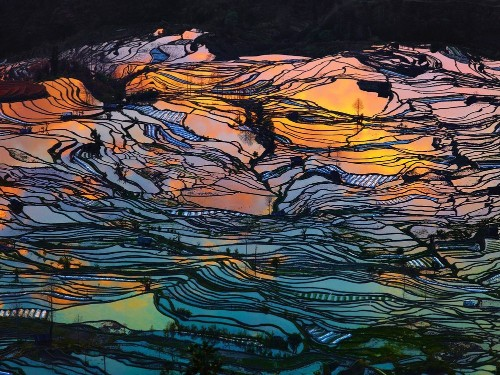 Beauty Paddy of China - Photographs and text by Thierry Bornier | LensCulture