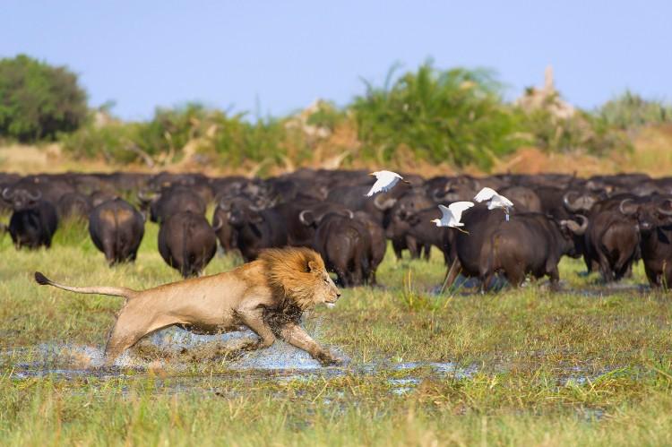 The Okavango: why you need a safari in Botswana's delta