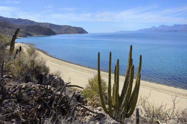 Getting back to nature in Baja California Sur