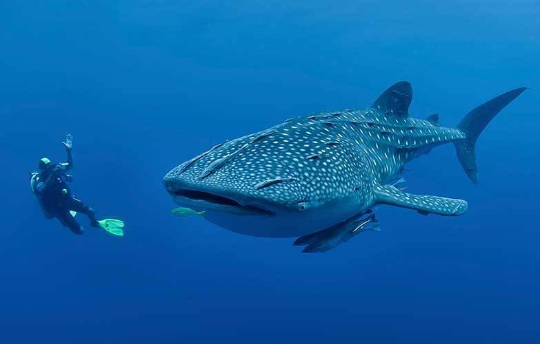 Travel with whale shark - Magazine cover