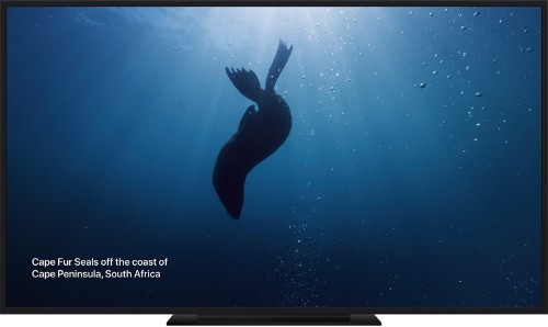 New Under the Sea Themed Screen Savers Now Available on Apple TV in tvOS 13