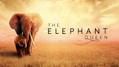 Apple Releases Trailer for 'The Elephant Queen' Ahead of Movie's November 1 Debut on Apple TV+